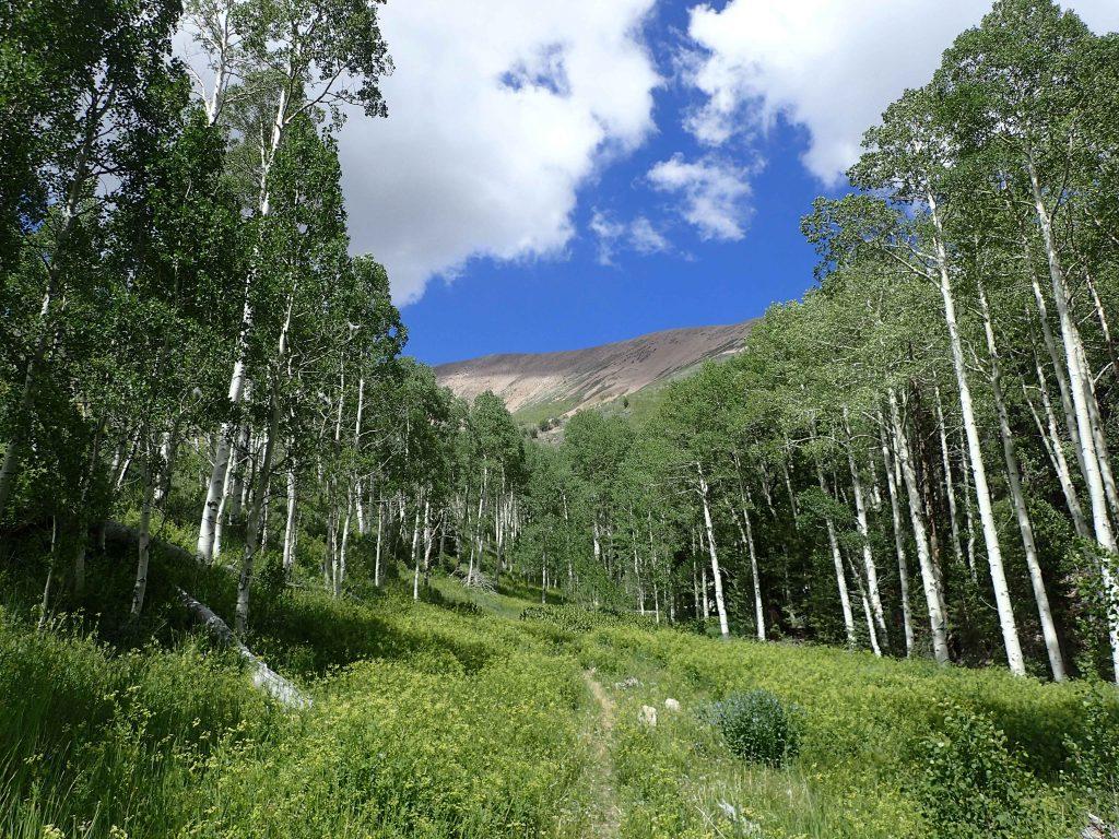 North Schell Creek Trail