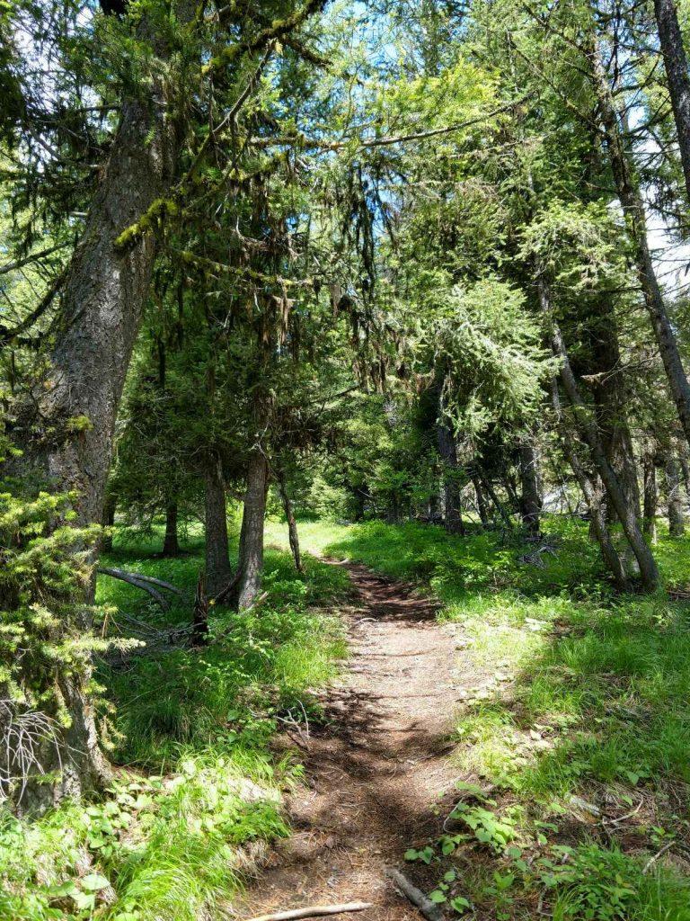 Bitterroot Trail Montana