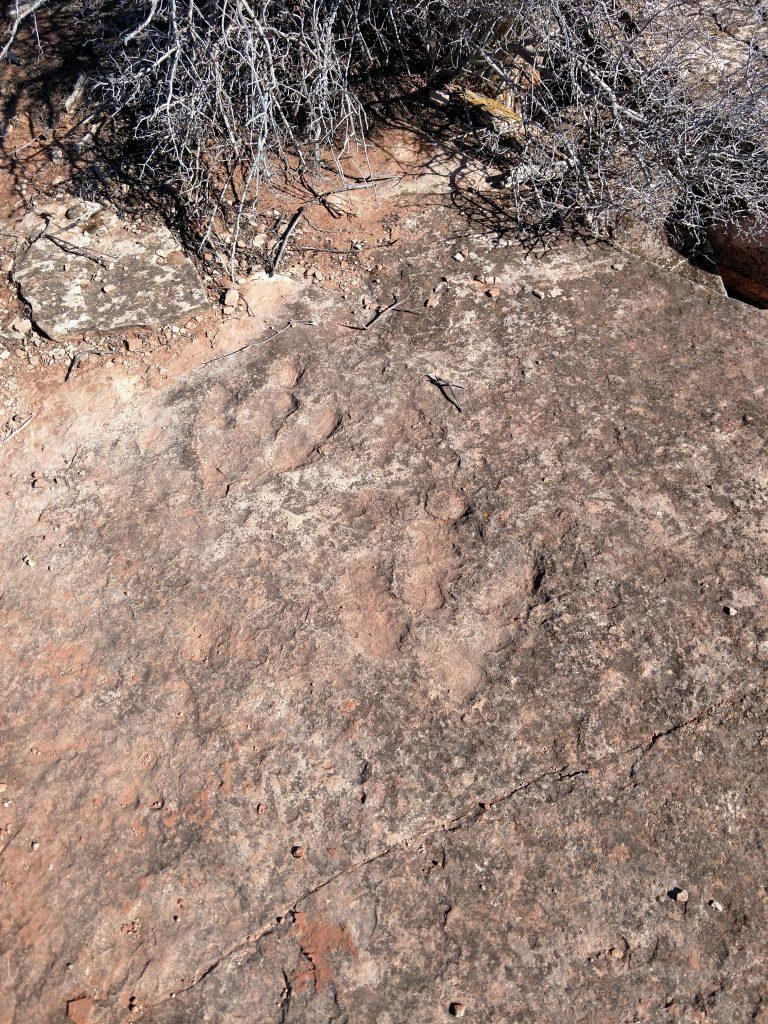 Dinosaur Tracks, Utah