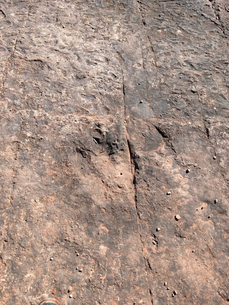 185 million year old dinosaur tracks