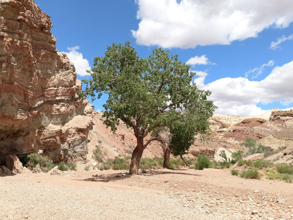 Approach to Little Wild Horse Canyon