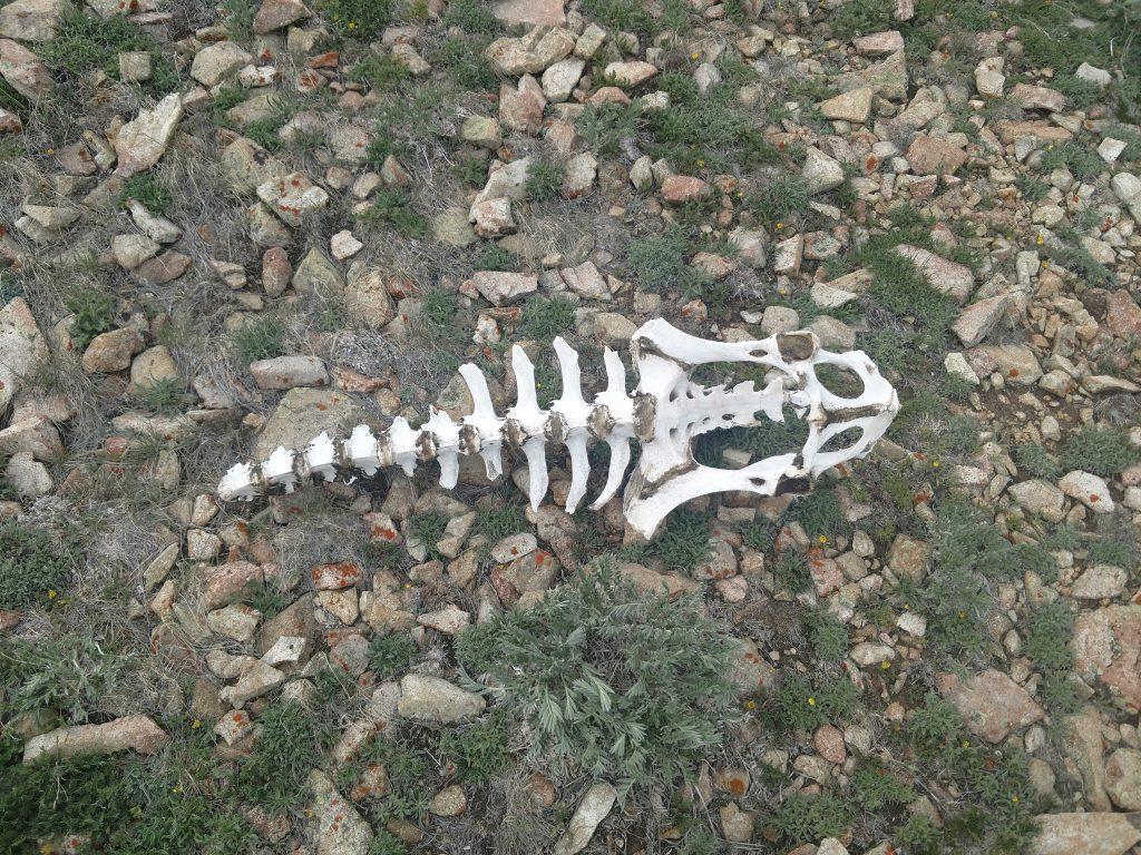 skeleton on mt ellen
