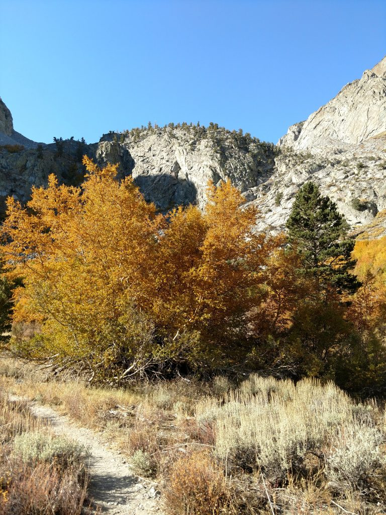 Eastern Sierra Fall Colors (2)