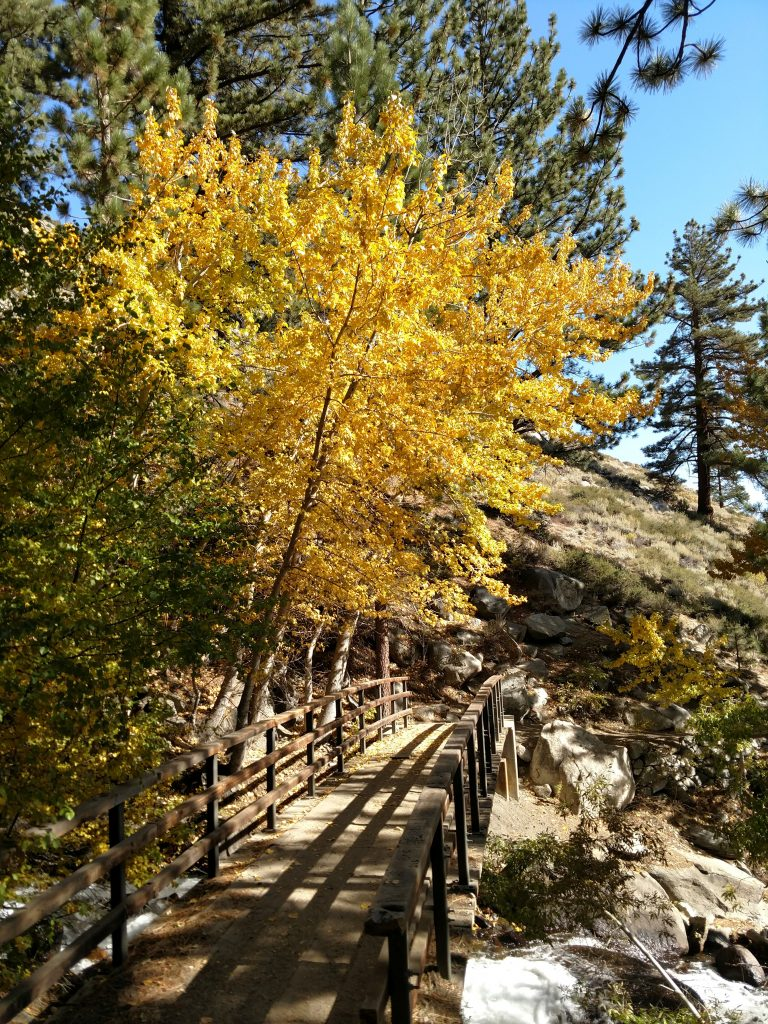 Eastern Sierra Fall Colors (4)