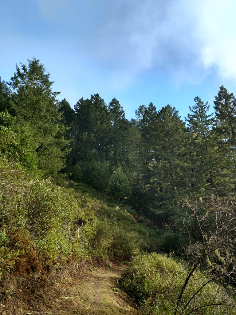 hike Purisima Creek Redwoods Trail