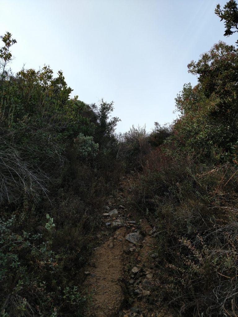 Bushwhack up Margarita Peak