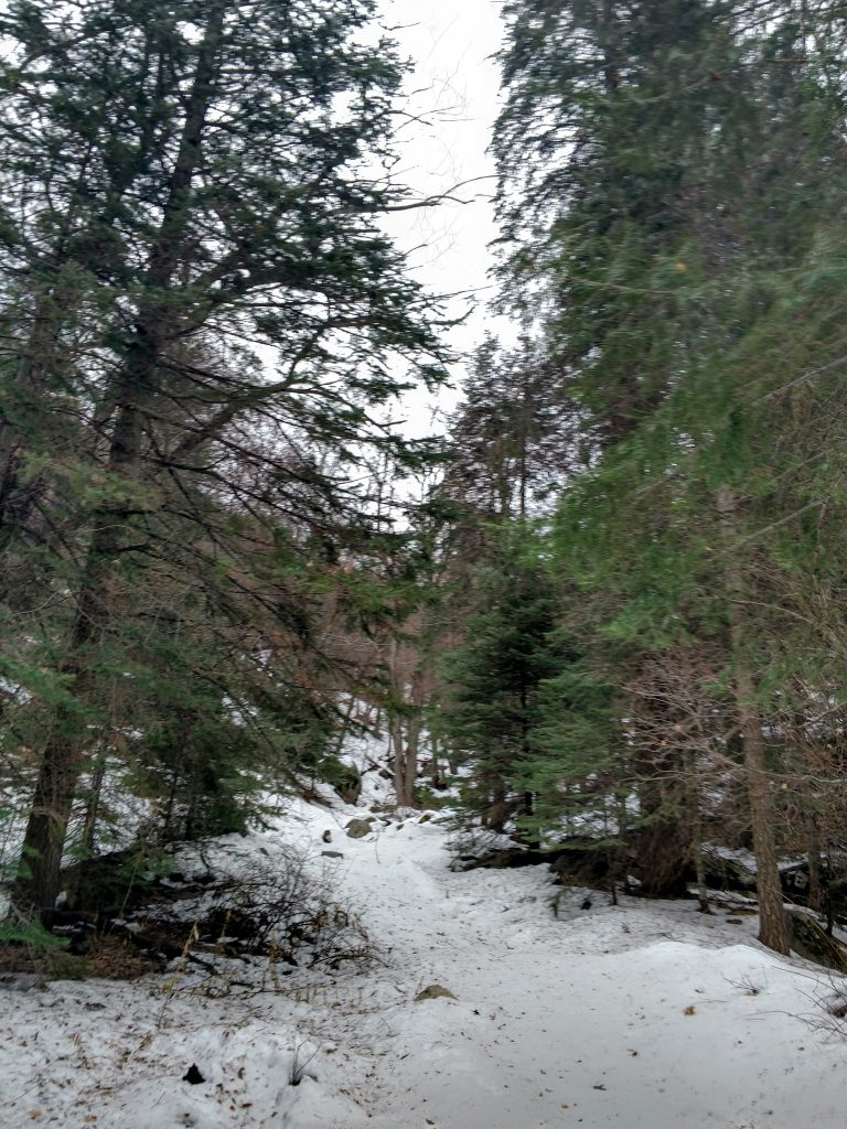 Ferndell Spring Trail