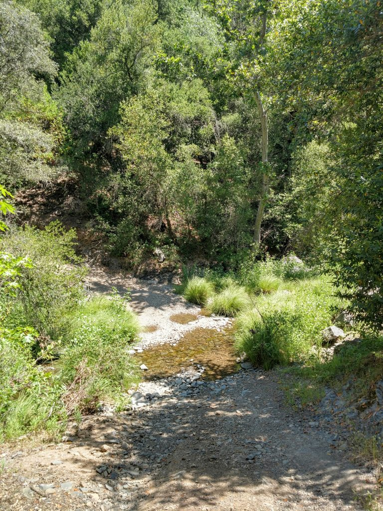 Middle Fork of Coyote Creek