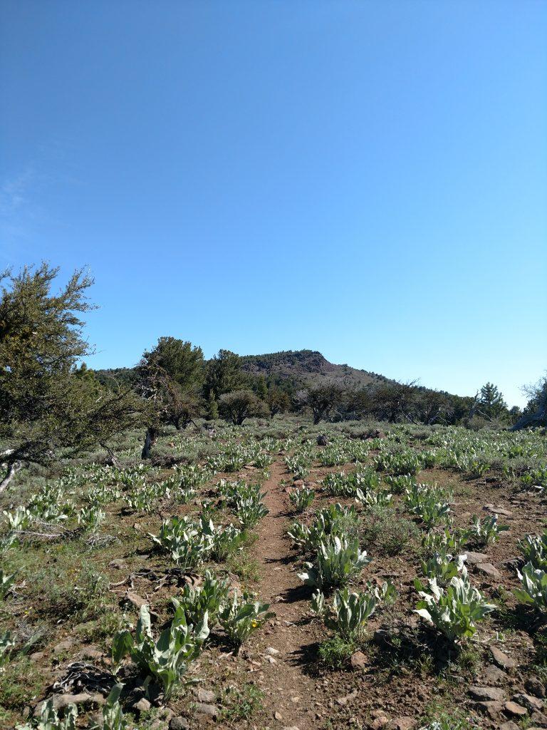 Emerson Peak