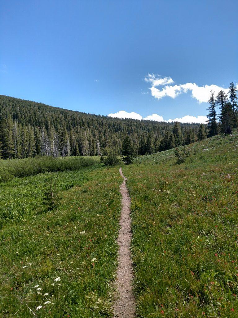 Mt Lola Trail