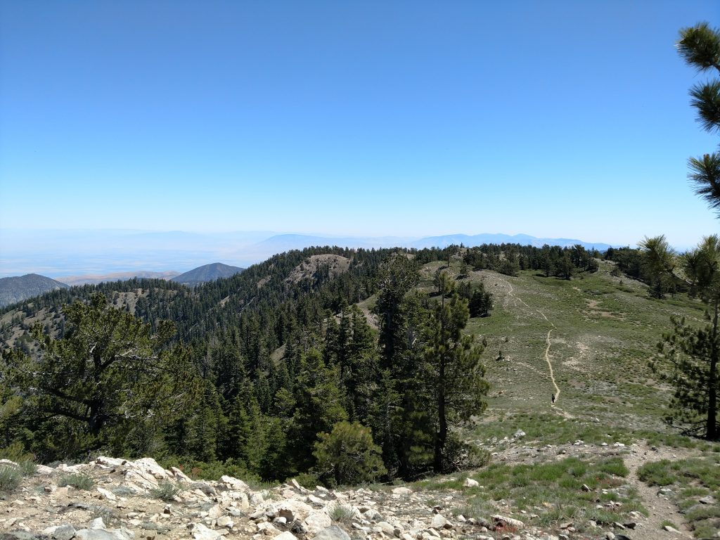 Mt Pinos Summit View