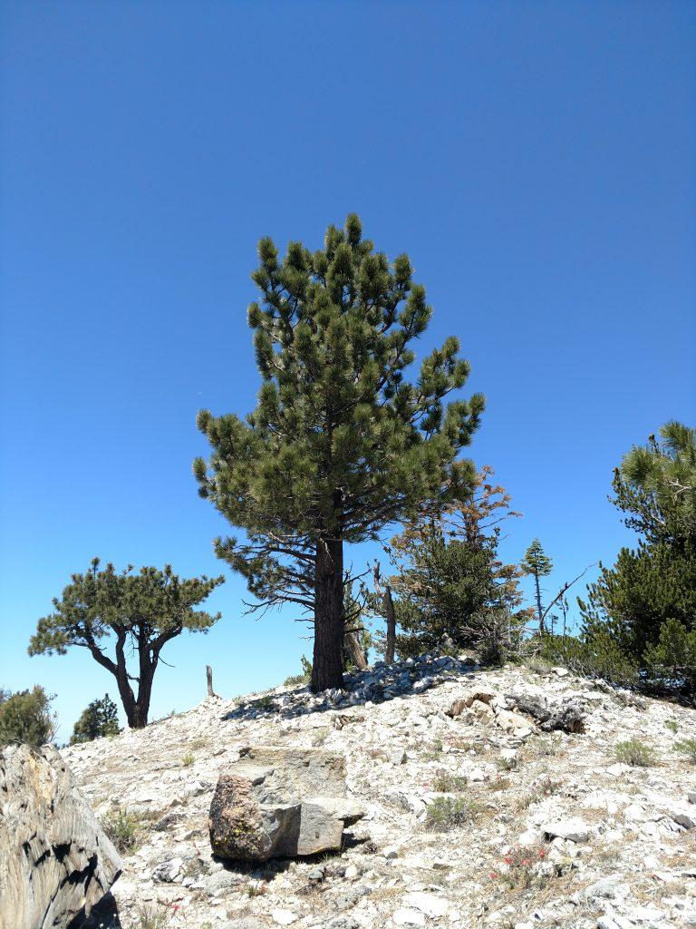 Sawmill Peak West