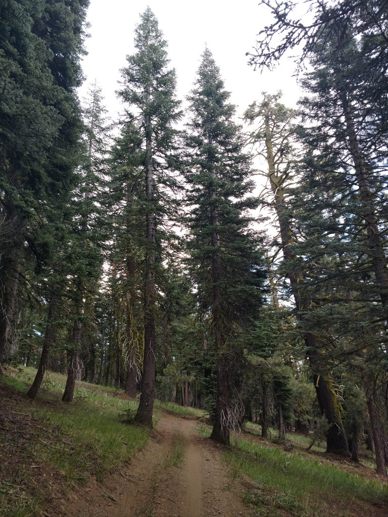 Mokelumne Coast to Crest Trail