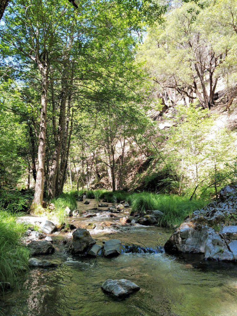 South Fork Stony Creek